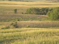 Лісоводи відповідатимуть за 6,5 мільйонів гривень на знищення степу