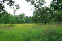 Заплавний ліс урочища Бичок.  Фото з сайту ukrainaincognita.com