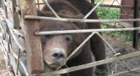 bear-free