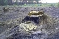 forestcut