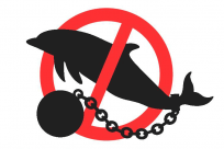 freedolphins