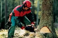 Екологи закликають не приховувати інформацію про лісову галузь